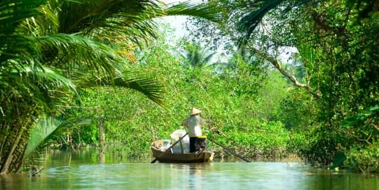 Mekong Delta Coconut Forest