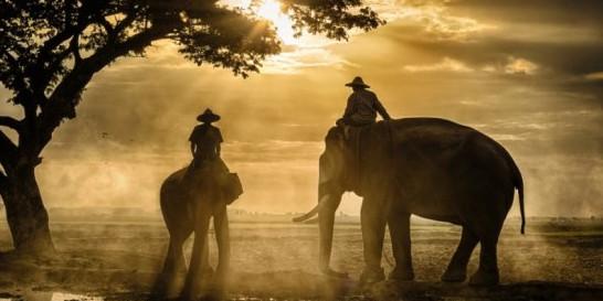 Northern Thailand elephants