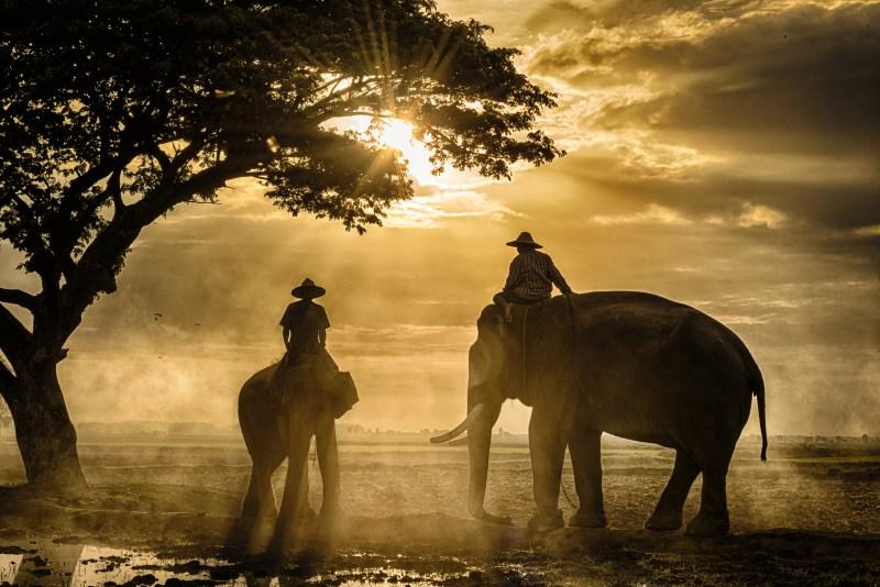 Thailand Elephant, Chiang Rai
