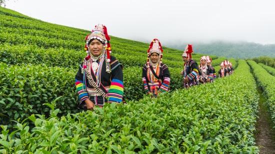 Doi Mae Salong Hill Tribe People