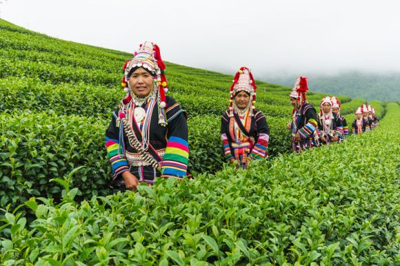 Akha ethnic people on the tea plantation at Mae Hong Son area in northern Thailand.